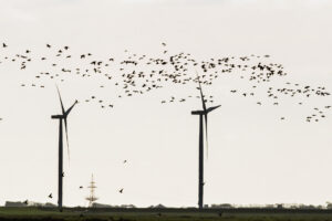 birds and windmills I Southern Denmark