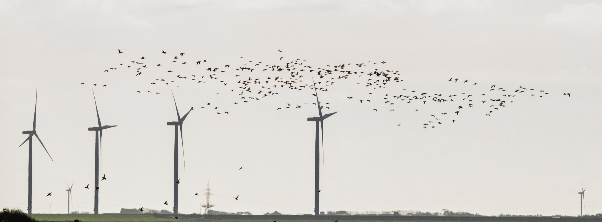 Birds and windmills